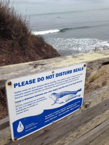 Seals in California and...