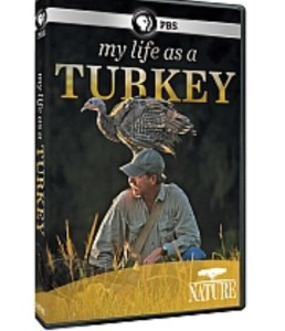 """My Life As A Turkey"" is being rebroadcast on PBS stations this week."