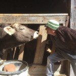 The Idiot had forgotten that cows close their eyes when they kiss. (Photo: Sonia Stratte-McClure)