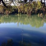 The Idiot, for the first time since his back surgery two months ago, walked the six-mile loop on the Sacramento River Trail and discovered a new rope swing. Perfecting ending to a stroll on a hot summer morning.